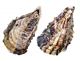 牡蠣(カキ)殻灰入りの漆喰について